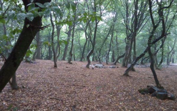 Drum asfaltat spre Pădurea Hoia-Baciu