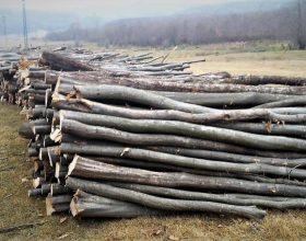 Peste 20.000 de metri cubi de lemn au fost tăiați ilegal în acest an