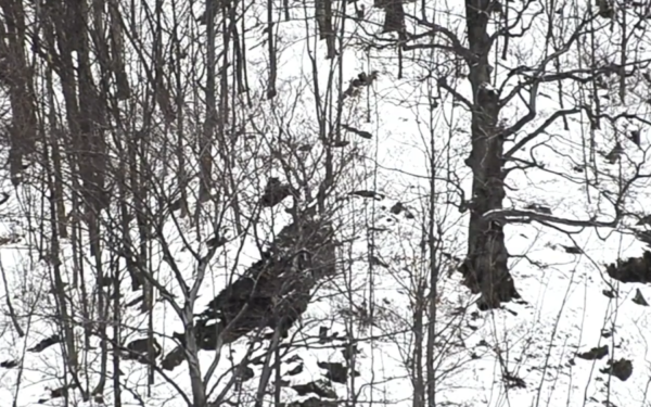 VIDEO | Doi pui de urs au fost filmați în timp ce se jucau în pădure
