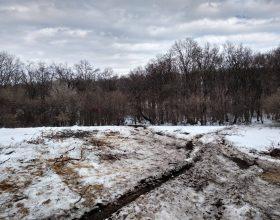 Autoritățile vor face verificări în Pădurea Horia – Baciu, după tăierile masive de copaci