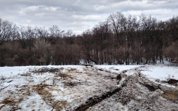Autoritățile vor face verificări în Pădurea Hoia – Baciu, după tăierile masive de copaci
