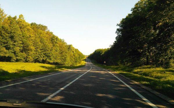 38 de hectare de perdele forestiere pentru protecția drumurilor naționale vor fi plantate în județul Cluj