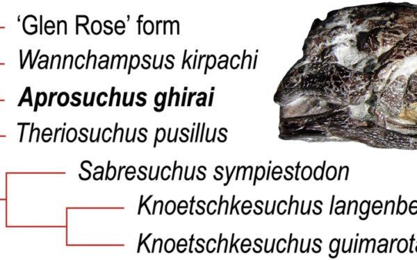 Crocodilul pitic de Hațeg, descoperit de doi cercetători de la UBB Cluj