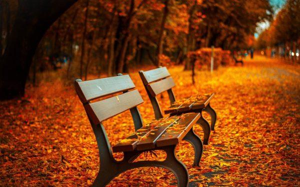 Undă verde pentru Pădurea clujenilor, cel mai mare parc din oraș