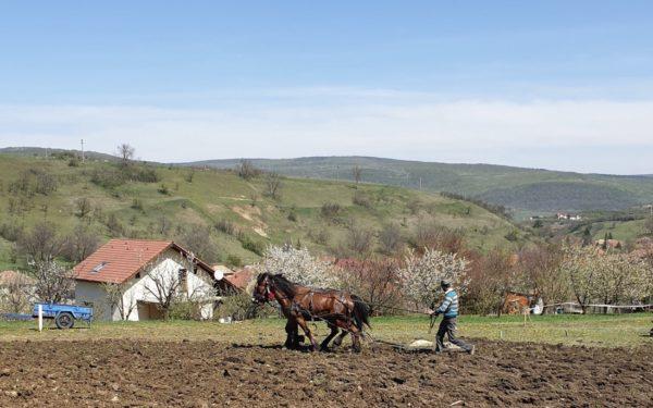 Proiect inedit la Cluj. Zece familii care trăiesc la bloc au primit teren la țară ca să-și cultive propriile legume și fructe