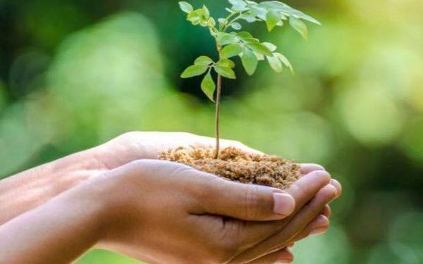 """""""Nu lăsa să treacă anul până nu plantezi copacul!"""". Acțiune de împădurire în Feleacu"""