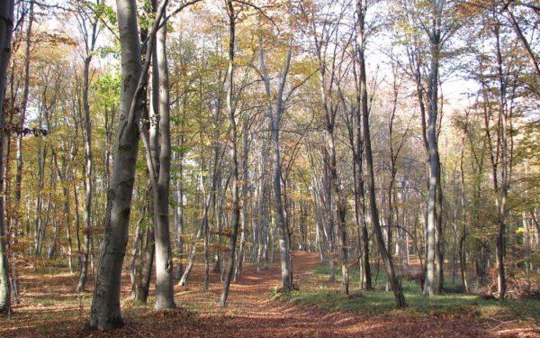 Pădure-parc în Făget. Primăria va amenaja spații pentru plimbare și sport