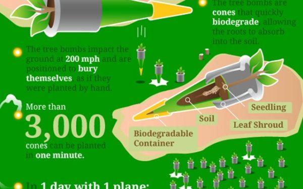 """Bombardamentul"" cu copaci ar putea salva planeta!"