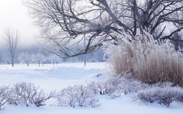 Meteorolog: Vremea rece se menține și mâine la Cluj. Nopțile și diminețile vor fi geroase