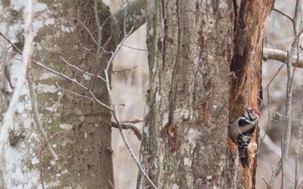 VIDEO | Păsările din Parcul Retezat, așa cum, probabil, nu le-ați mai văzut