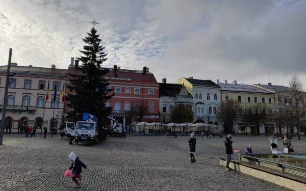 AUDIO | Cum a ajuns bradul de Crăciun în centrul orașului, din curtea unui clujean din cartierul Iris